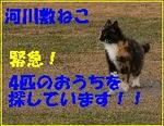 Satooya